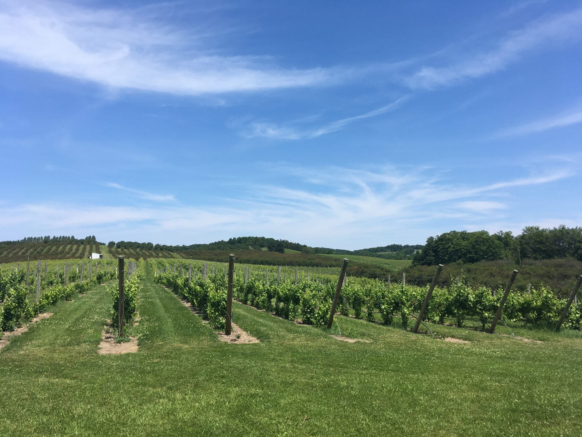 contact page picture - vineyard of northern michigan